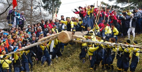 Harumiya's 4th pillar, The first of the festival, ready to fall, 2010 (Courtesy of the Shimin-shimbun)